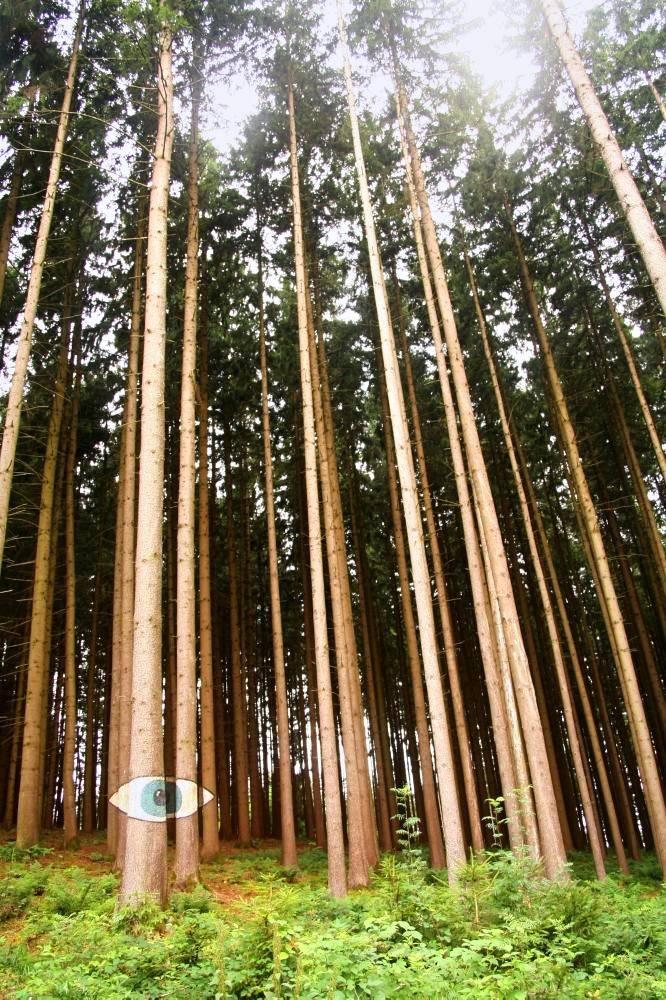 """Der """"Wald der Kunst"""" – Informationen und Anmeldung zu den Aktionstagen"""